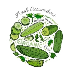 Hand Drawn Cucumber 02 A vector