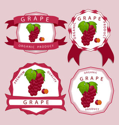 the red grape vector image
