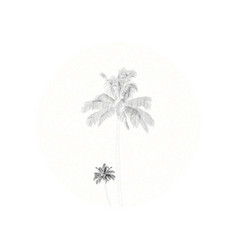 Drawing style palm trees and border vector