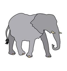 elephant wild animal safari african vector image