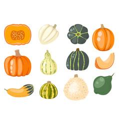 fresh orange pumpkin decorative seasonal ripe food vector image