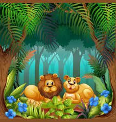 lion in the jungle vector image