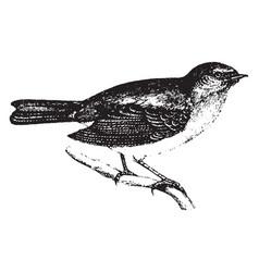 Robin vintage vector