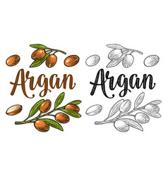 Set argan branches leaves nuts vector