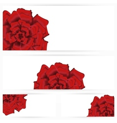Set of red roses isolated on white background vector image vector image