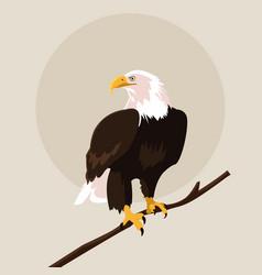 Bald eagle bird in the branch vector
