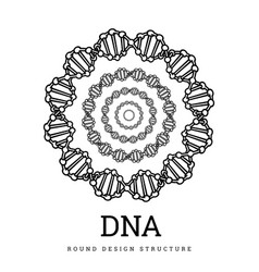 Dna structure deoxyribonucleic acid vector