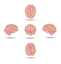 set five human brains with shadow from vector image