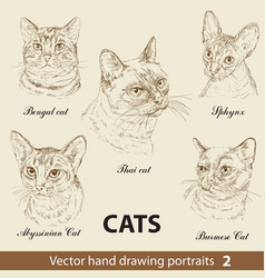 set hand drawing cats 2 vector image
