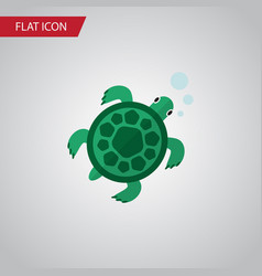 isolated turtle flat icon tortoise element vector image