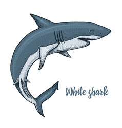 sea creature white shark engraved hand drawn in vector image