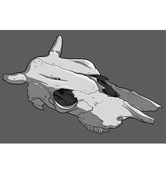 skull cow vector image