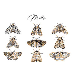 Cute butterfly and moth collection in retro style vector