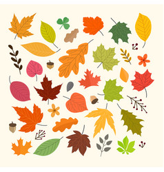 different autumn leaves collection isolated vector image