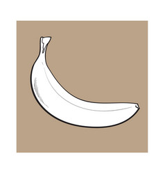 one unopened unpeeled ripe banana sketch style vector image vector image