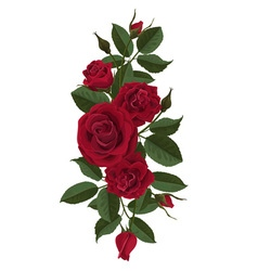 Red roses flowers buds and leaves vector image