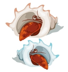 Red lobster peeking out of shell isolated vector image