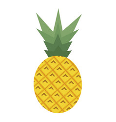 pineapple on the white vector image vector image