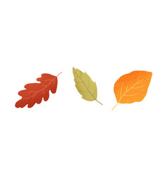 dry autumn leaves oak ash and birch trees vector image