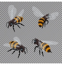 honey bee set on a transparent background vector image