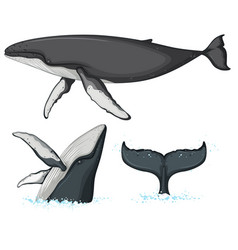 humpback whale character on white background vector image