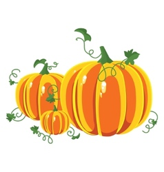 Pumpkin with leaves on a white background vector