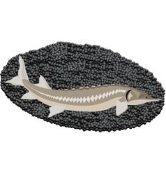 Sturgeon and caviar vector