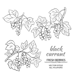Black currant set vector