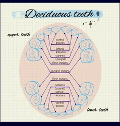 Human teeth vector