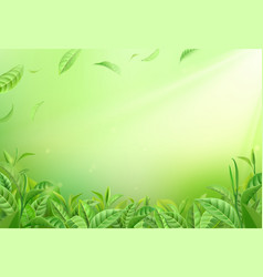 tea leaves background realistic green foliage vector image