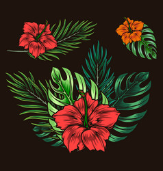 beautiful tropical floral vintage composition vector image