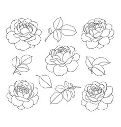 Contoured simple rose flowers and leaves set vector