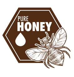 pure honey poster with bee monochrome sketch vector image