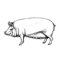 Pig in hand drawn style vector image vector image