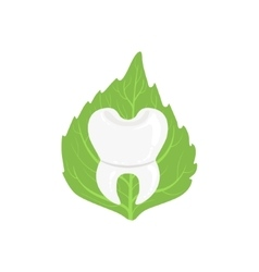 White Healthy Tooth With Roots With Green Leaf On vector image