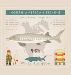 white sturgeon vector image