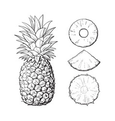 whole pineapple and slices - peeled unpeeled vector image vector image