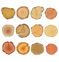 Tree cut sections wood icons set vector