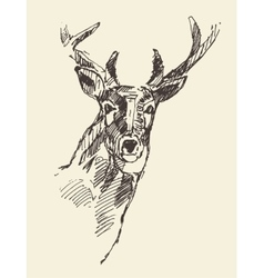 Deer head hand drawn sketch vector