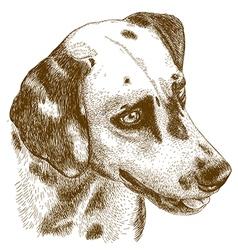 engraving dalmatian head vector image