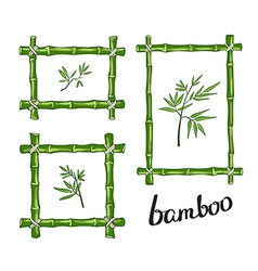Green bamboo frames vector