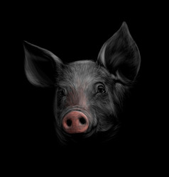 portrait of a pig head on a black background vector image