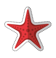 starfish animal isolated icon vector image