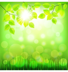 Summer nature background with green foliage vector image