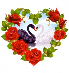red roses and couple swans vector image