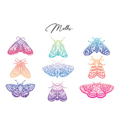 Gradient collection of moth decorative style vector