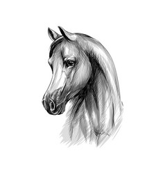 Horse head portrait on a white background hand vector