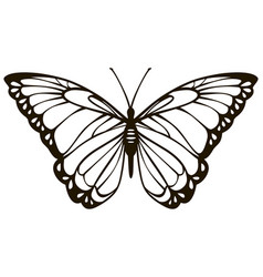 Simplified stylized lovely butterfly vector