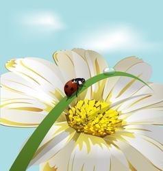 ladybird on herb vector image vector image