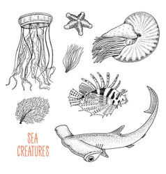 sea creature nautilus pompilius jellyfish and vector image